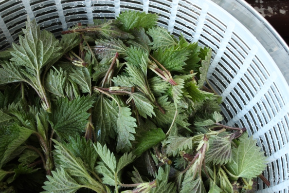 Nettles in the spinner