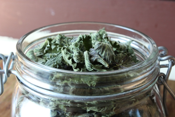 Jar of dried nettles