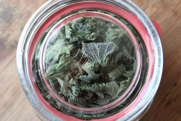 Jar of nettles