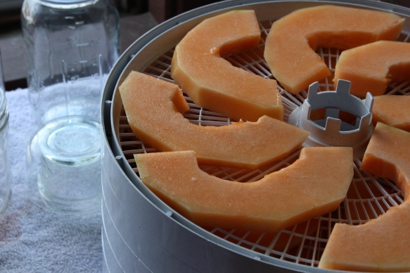 Sliced cantaloupe on dehydrator trays