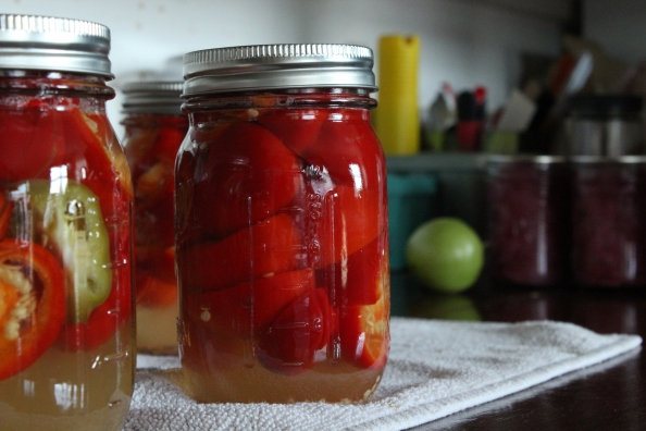Pickled hot peppers right out of the canner