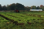 Farmer arugula and lettuces