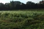 Farmer kohlrabi and fennel