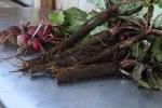 Gleaned turnips and foraged burdock