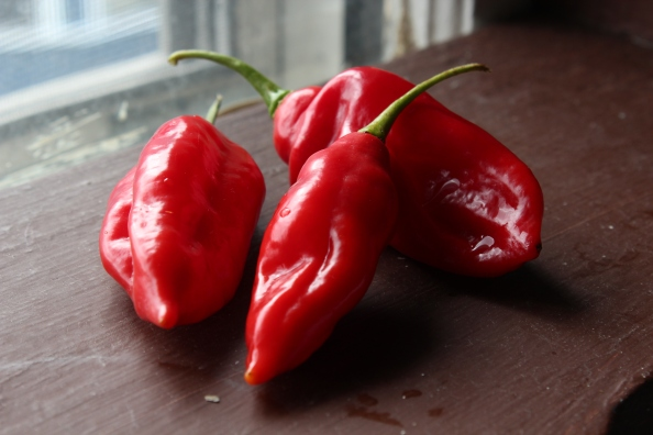 Red ghost peppers
