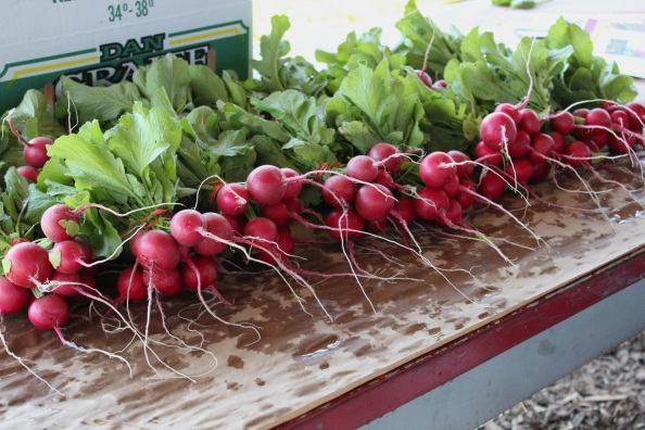 Freshly-harvested radishes from the Learning Garden