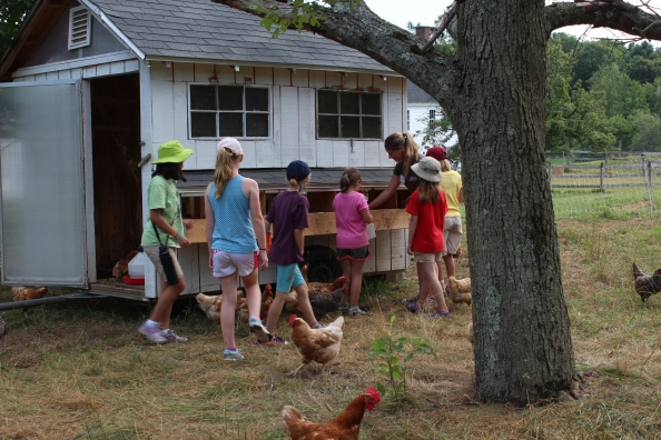 Kids and counselor checking for late afternoon eggs
