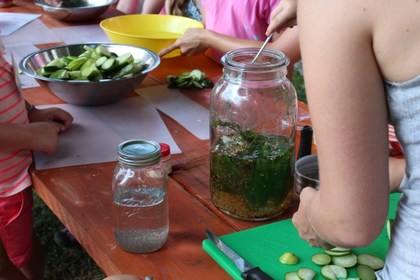 Preparing overnight dill pickles